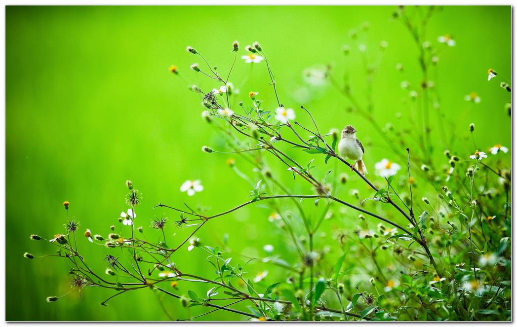 Beautiful Wildflower Wallpapers Background Image
