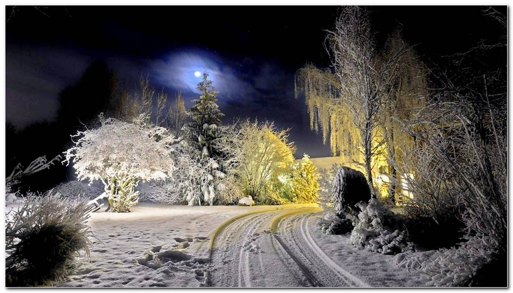Beautiful Winter Night Nature Wallpaper Background In The Moonlight