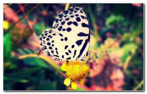 Beautiful Butterfly HD Wallpaper