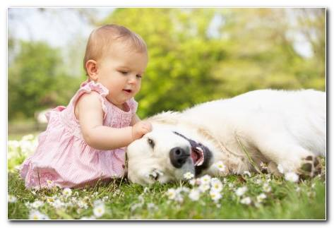 Beautiful Girl Play With Dog Hd Wallpaper