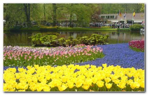 Beautiful Mix Tulips HD Wallpaper