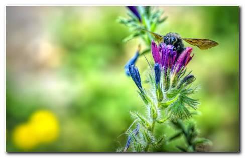 Bee eating HD wallpaper