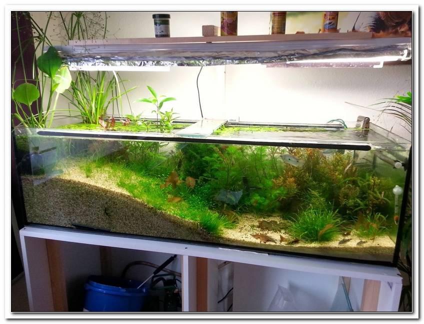 Beleuchtung F?R Offenes Aquarium