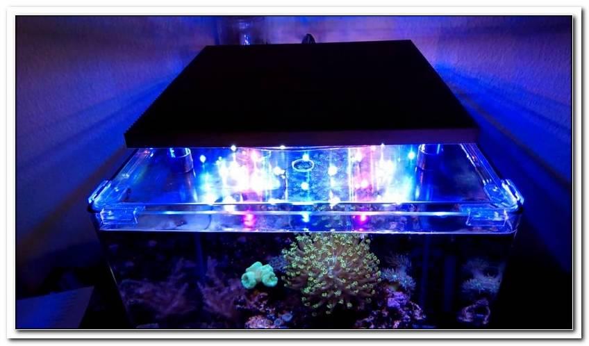 Beleuchtung Meerwasseraquarium Led