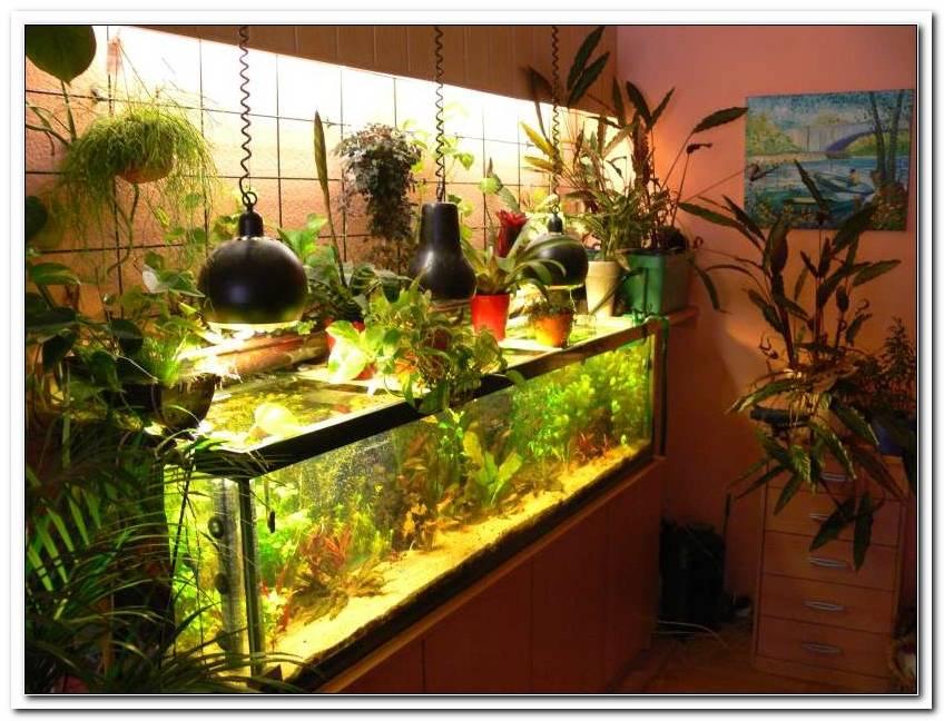 Beleuchtung Offenes Aquarium
