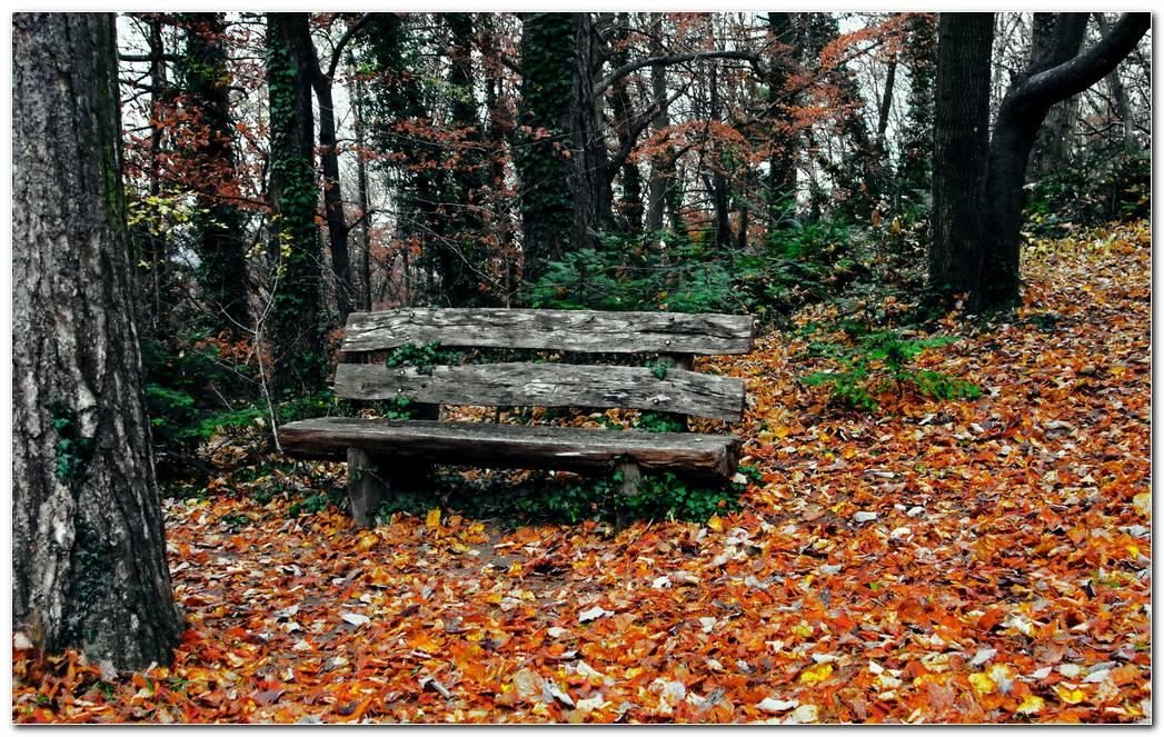 Bench Autumn Wallpaper Park