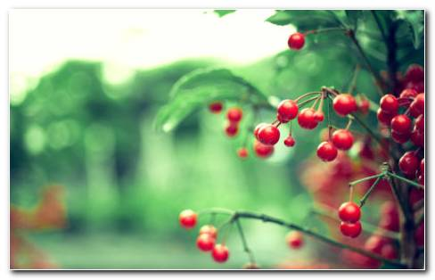 Berries HD Wallpaper