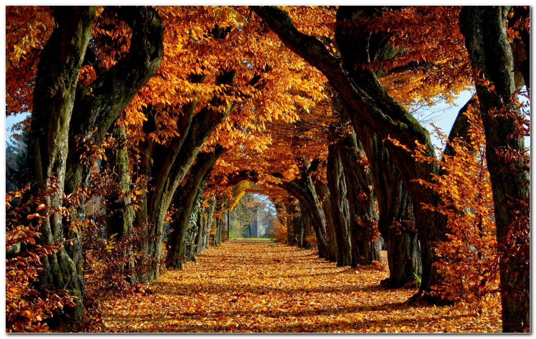 Best Autumn Season Nature Wallpaper Background
