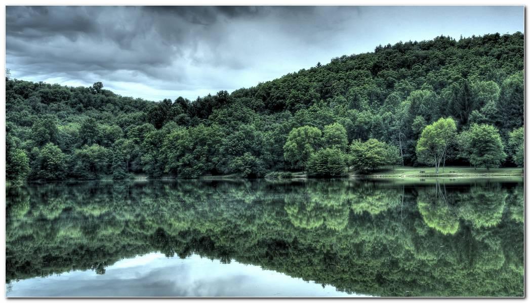 Best Forest Desktop Backgrounds Image