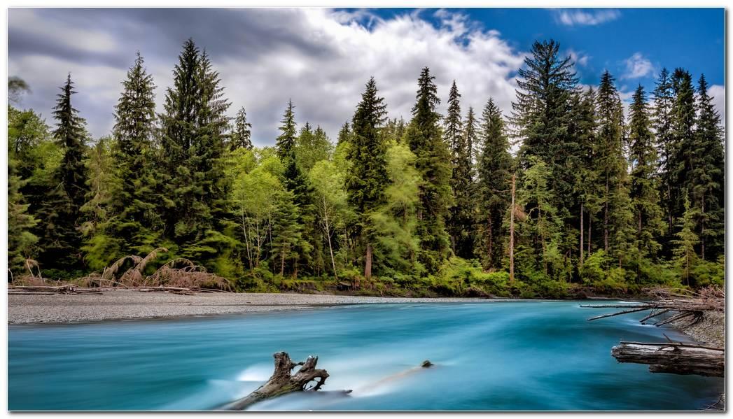 Best Forest Desktop Backgrounds Widescreen