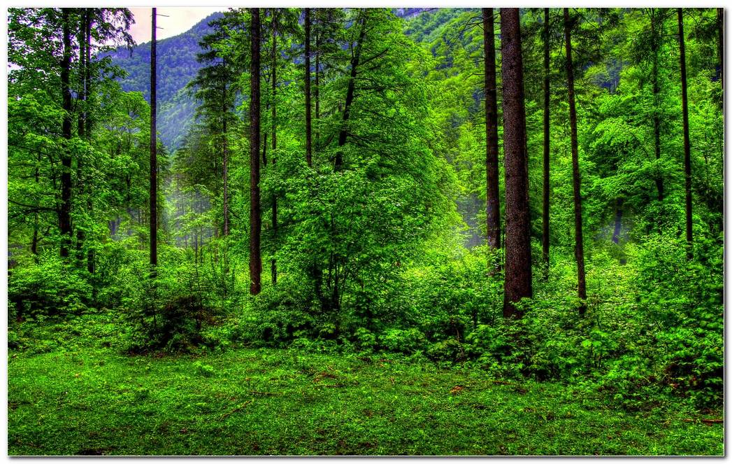 Best Green Forest Nature Wallpaper Background