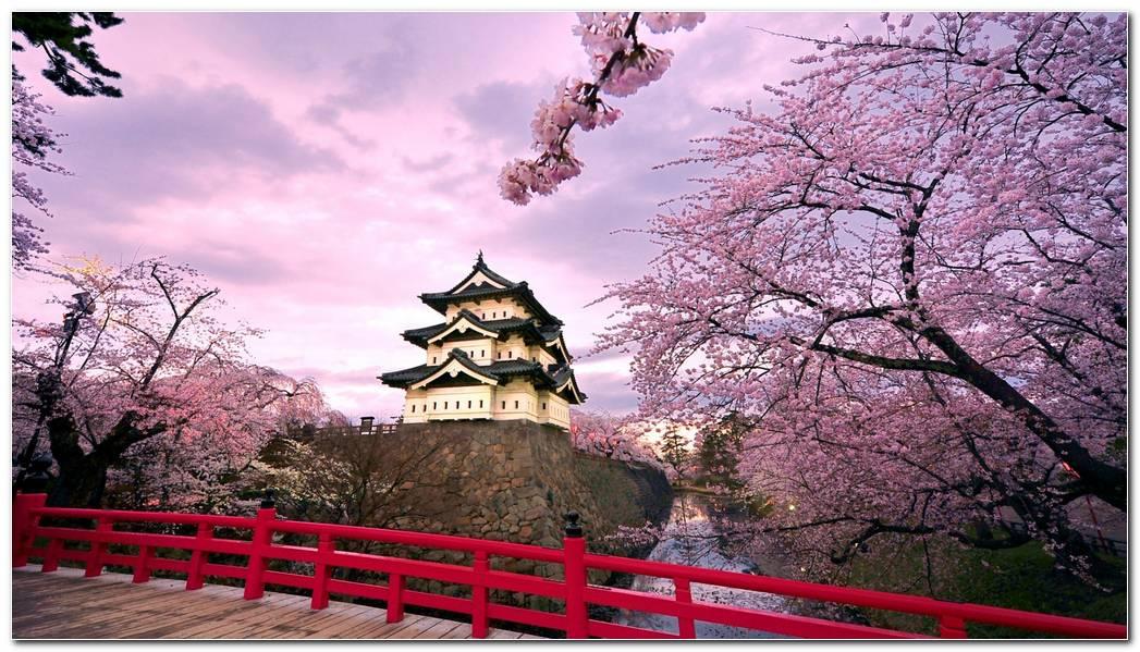 Best Nature Spring Wallpapers Desktop Image