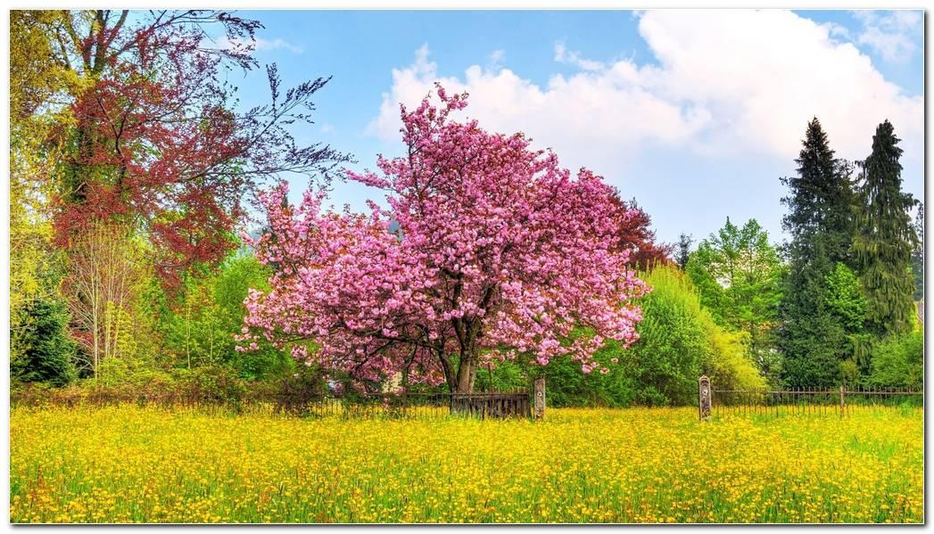 Best Spring Background Wallpaper Desktop Image