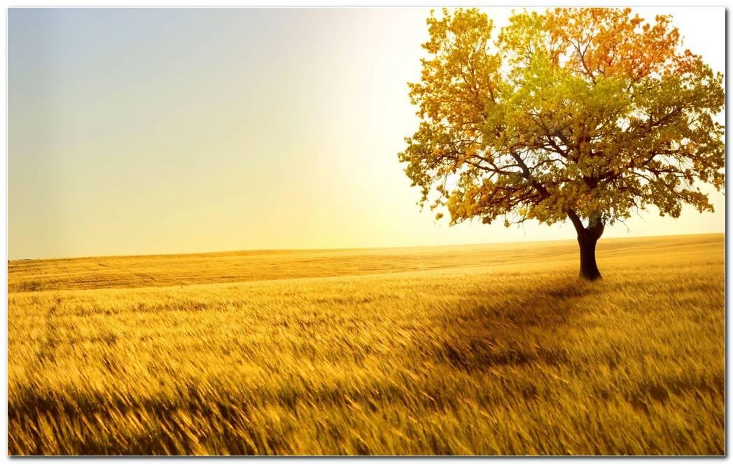 Best Tree Wallpapers Background Desktop