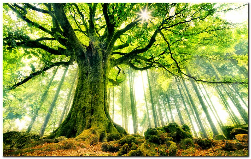 Best Tree Wallpapers Background Image