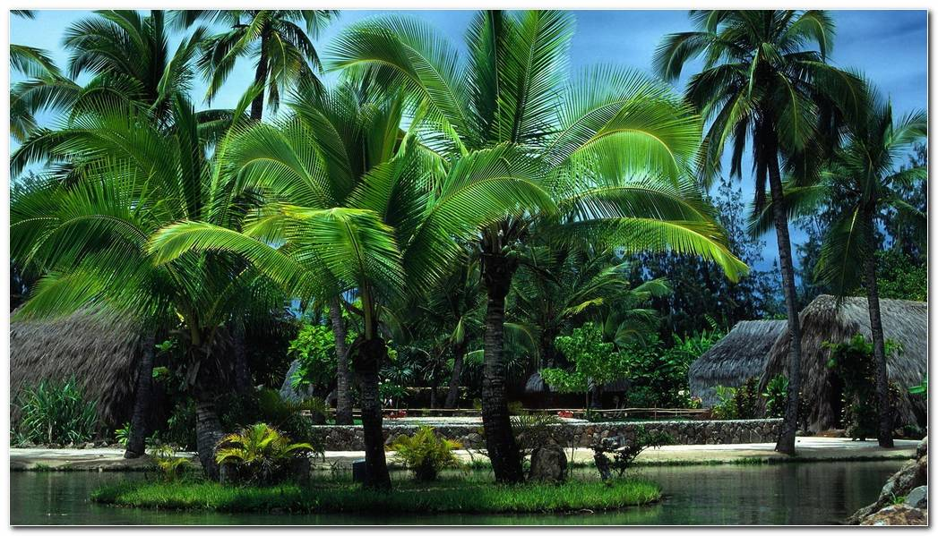 Best Tropical Palms Nature Wallpaper Background