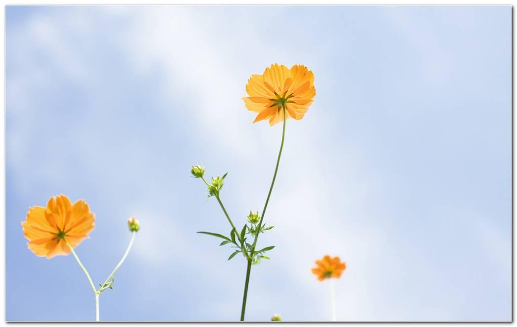 Best Wildflower Wallpapers Background