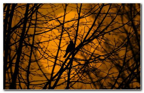 Bird On Tree HD Wallpaper