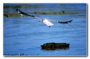 Birdwide Flying