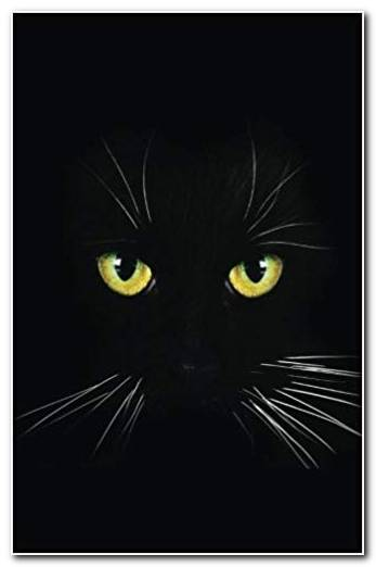 Black Cat Background