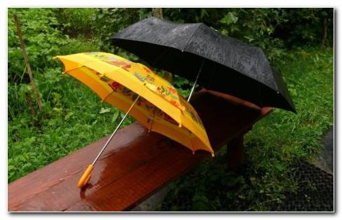 Black And Yellow Umbrellas HD Wallpaper