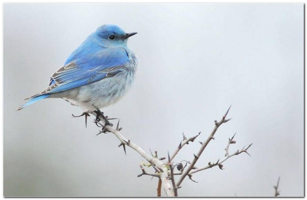 Blue Bird Background