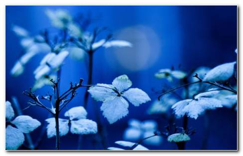 Blue garden okc HD wallpaper