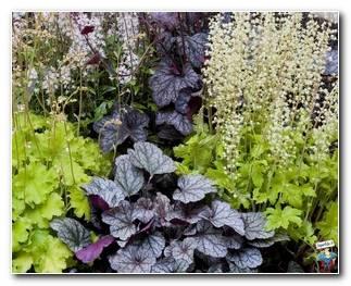 Botanical Gardens 15