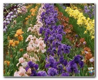 Botanical Gardens 21