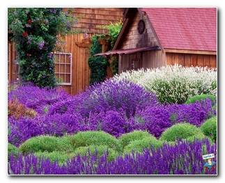 Botanical Gardens 35