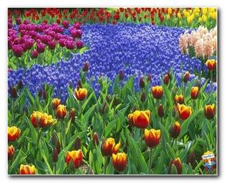 Botanical Gardens 36