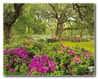 Botanical Gardens 40