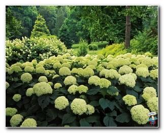 Botanical Gardens 47