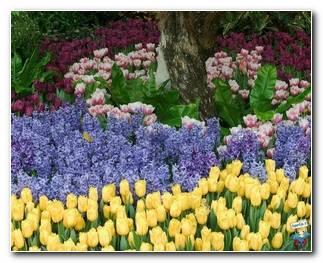 Botanical Gardens 48
