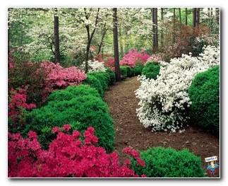 Botanical Gardens 54