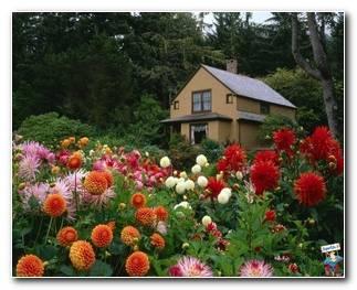 Botanical Gardens 63