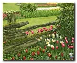Botanical Gardens 65