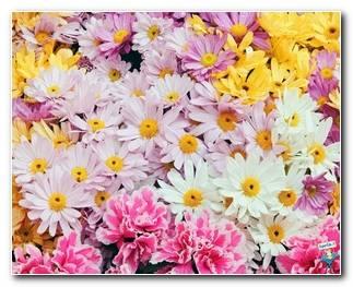 Botanical Gardens 68