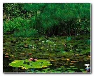 Botanical Gardens 69
