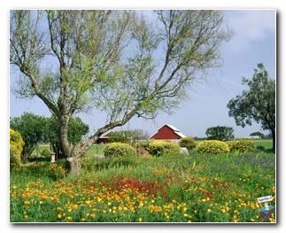 Botanical Gardens 75