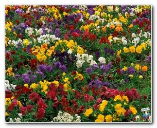 Botanical Gardens 76