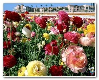Botanical Gardens 78