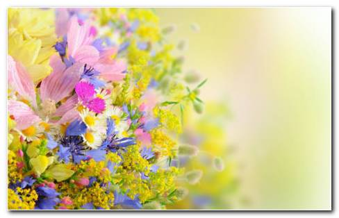Bouquet Of Light Colors HD Wallpaper