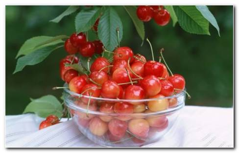 Bowl Full Of Red Cherries