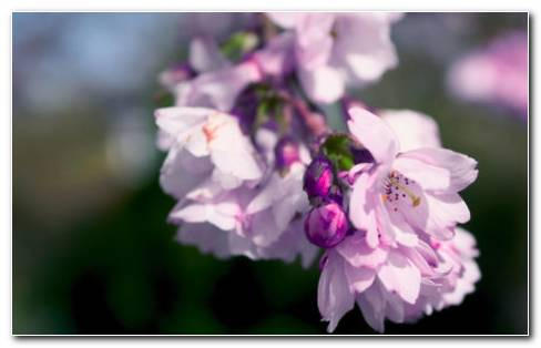 Branch Of Lilac HD Wallpaper