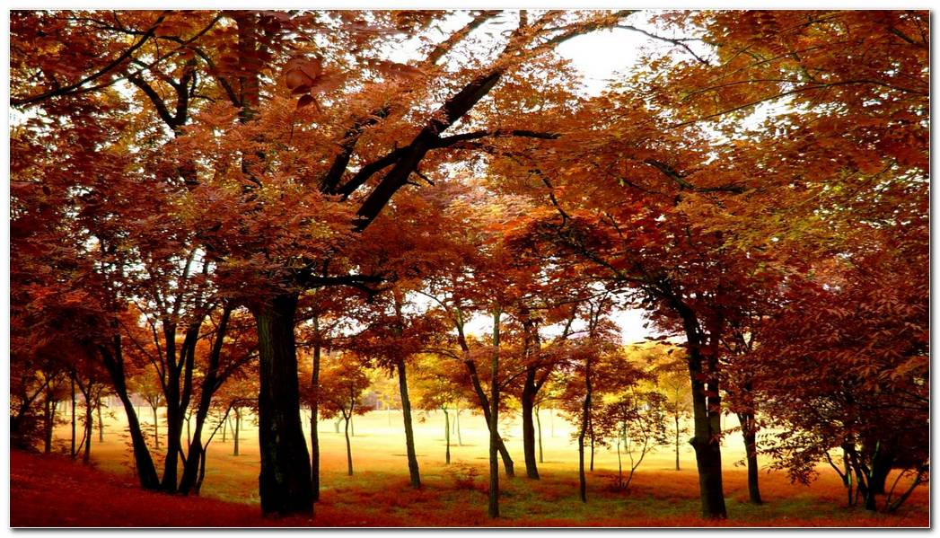 Brown Fall Season Forest Fun Autumn Gold Wallpaper Large Size