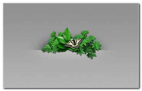 Butterfly On Leaves HD Wallpaper