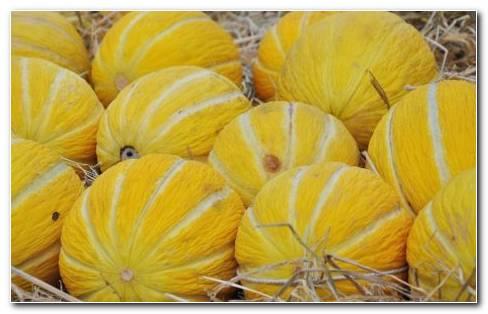 Cantaloupe HD wallpaper