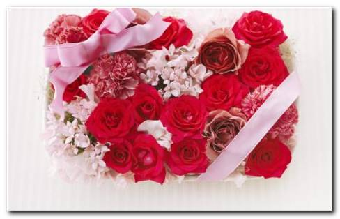 Carnations. Beautiful Gift Box With Red Roses And Pink Ribbons