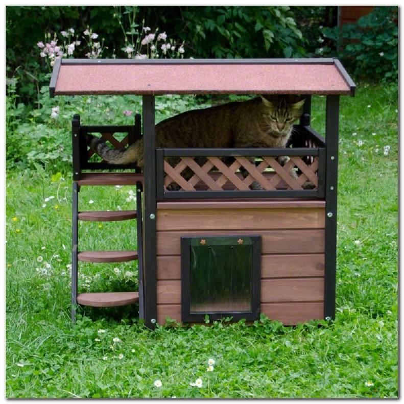 Casa Exterior Gatos